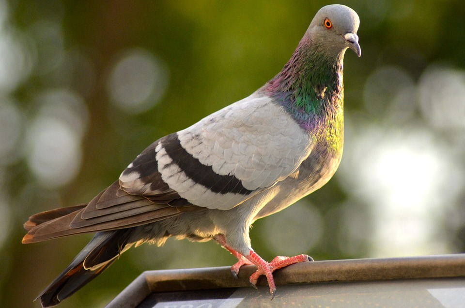 How To Stop Pigeons Eating Plants