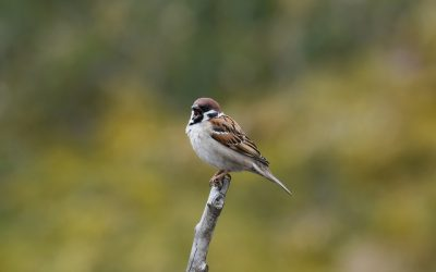 Are Sparrows Carnivores or Omnivores?