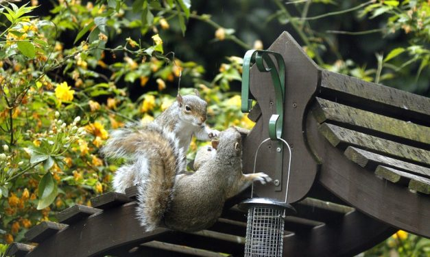 How to stop Squirrels eating Bird Seed