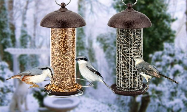 Best Bird Feeders (UK) 2019