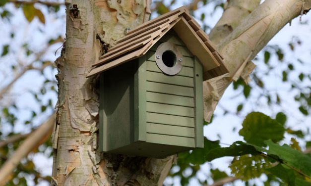 Why Aren't Birds Using My Nesting Boxes?