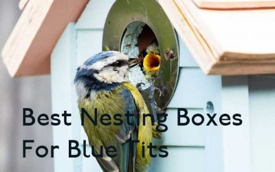 Best Nesting Box for Blue Tits