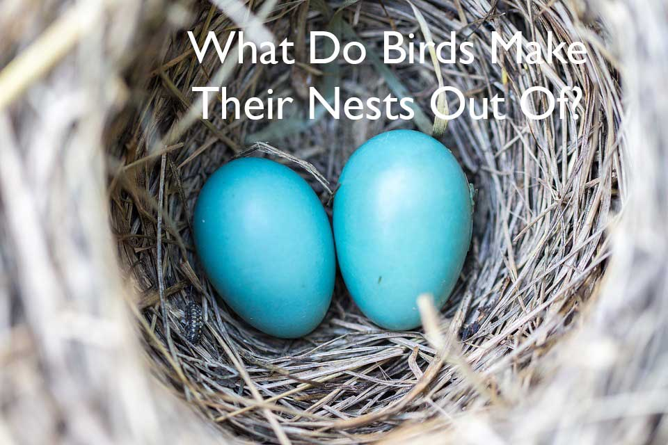 What do Birds Make Their Nests Out of?