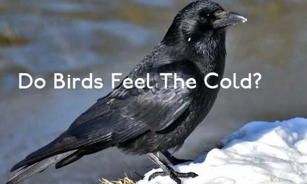 Do Birds Feel The Cold?