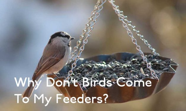 Why Don't Birds Come to my Feeders?