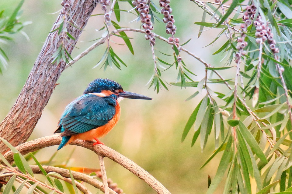What Do Kingfishers Eat?