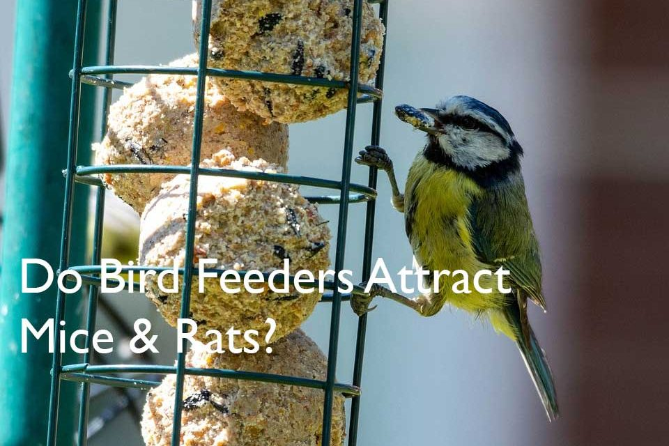 Do Bird Feeders Attract Mice and Rats?