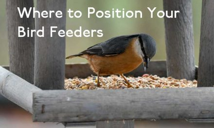 Best Place to Position Your Bird Feeders