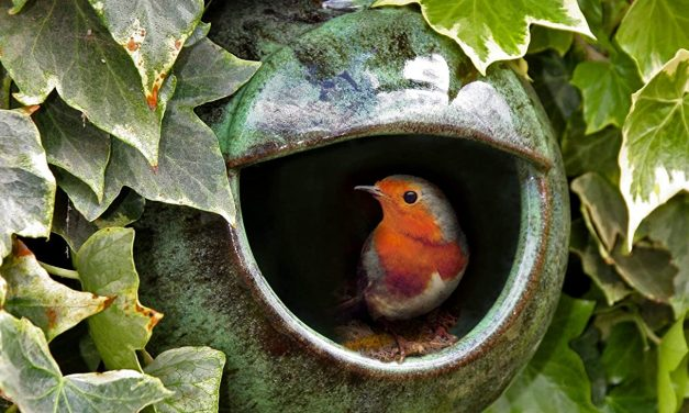 Best Nesting Box For Robins