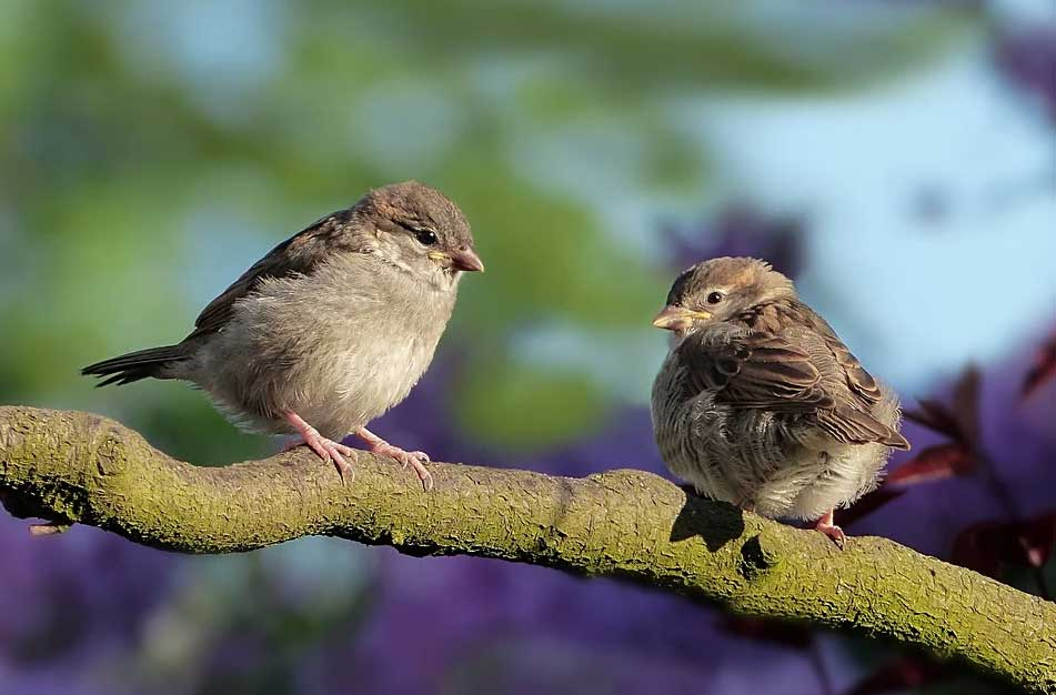 How To Attract Sparrows to Your Garden