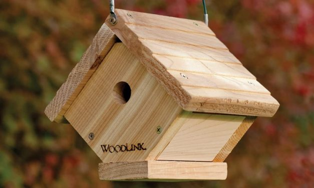 Best Nesting Box for Wrens