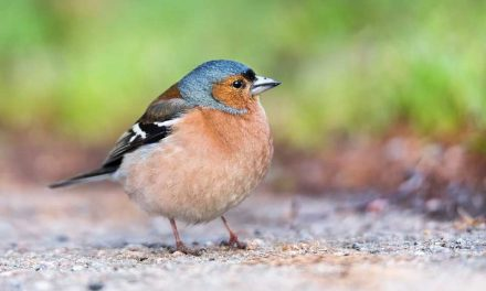 What Food do Birds Eat in Spring
