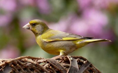 Will birds Visit a Garden with A Dog or Cat
