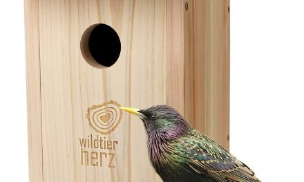 Best Nesting Box for Woodpeckers