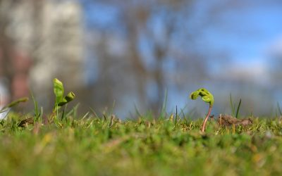 How To Stop Bird Seed From Germinating