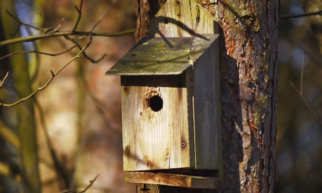 Should You Remove Old Bird Boxes?