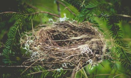 Do Birds Make Nests in Winter